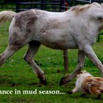 Chance in mud season.